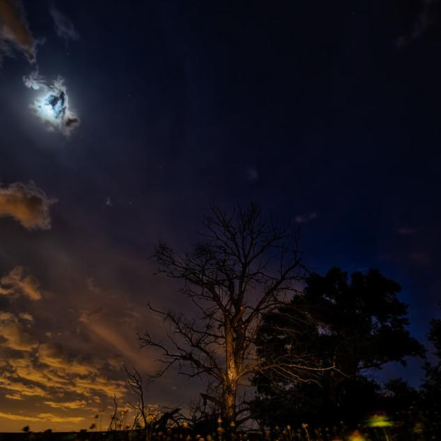 Moon over dead tree