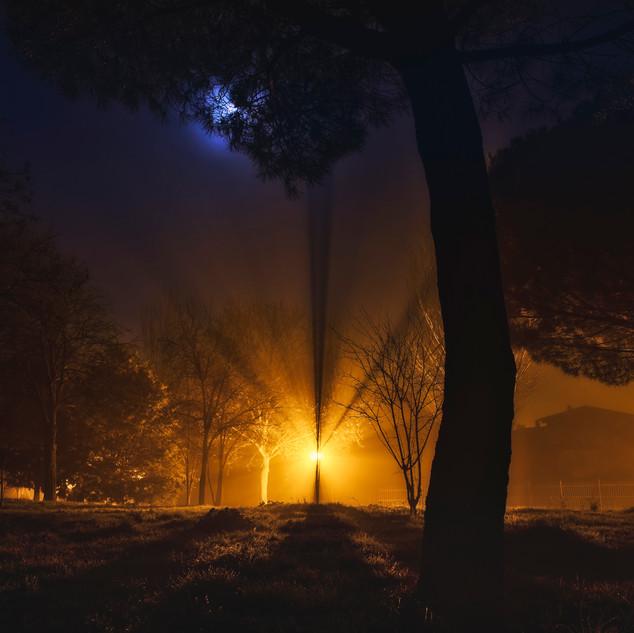 Niebla_parque.jpg