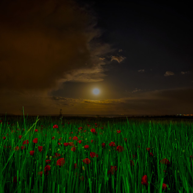 Moon over poppies