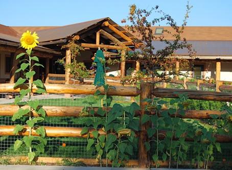 COVID-19 UPDATE - Honey Tree Preschool is Open