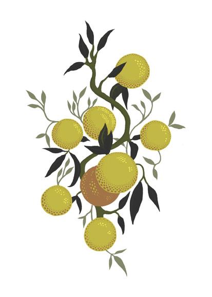 fruit poster.jpg