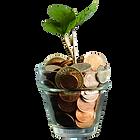 money tree.png