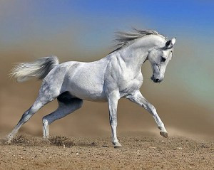 An untrained voice is like an untrained horse