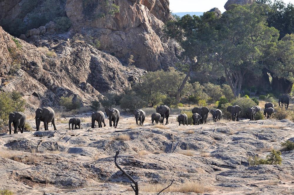 Elephant Safari Southern Africa Wilderness Travel