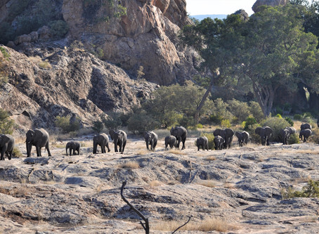 Safari Experts vs. Travel Generalists