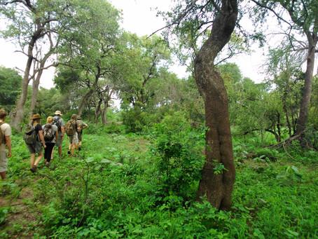 Walking Safari - The Spirit of Wandering
