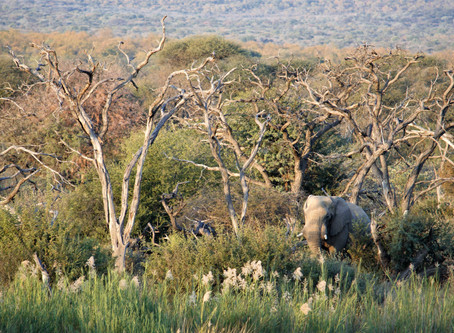 What to Keep In Mind When Visiting South Africa - Its Nature & People