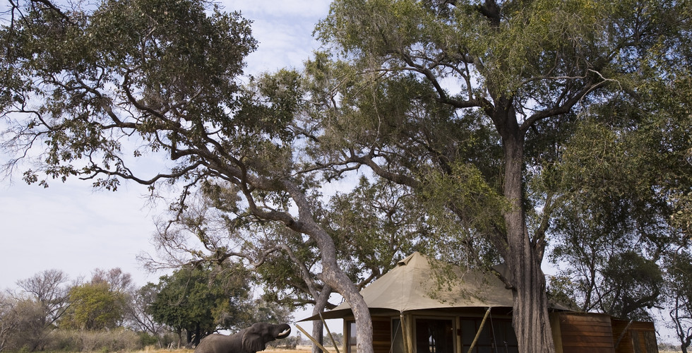 &Beyond Xaranna Okavango Delta Camp - Guest Tent with Elephant
