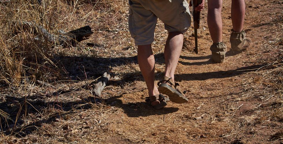 Marataba Trails - Green Monkey Safari & Dusty Foortprints