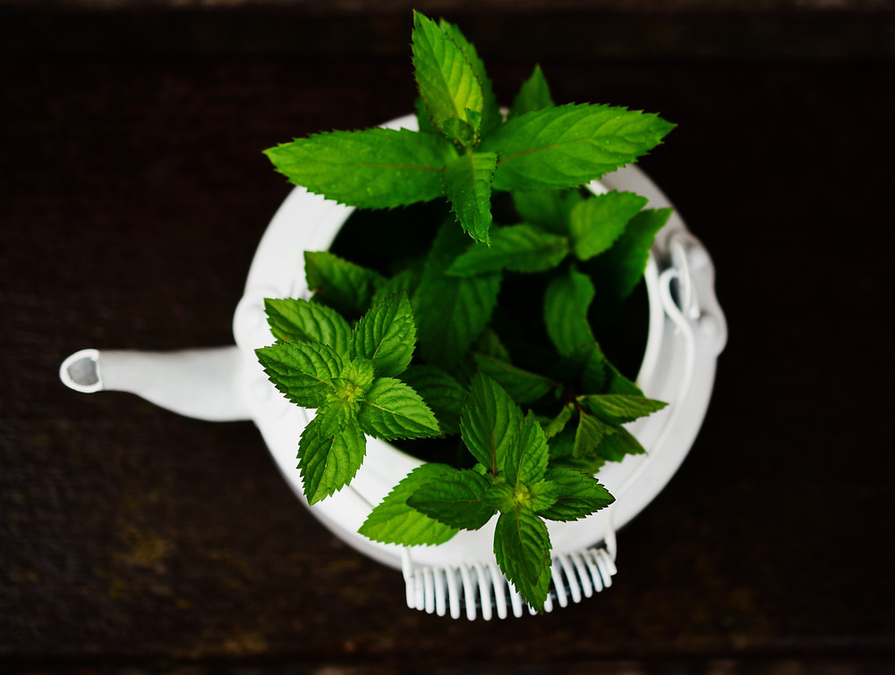 white tea kettle filled with peppermint leaves
