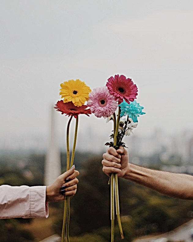 drz hands flowers.jpg