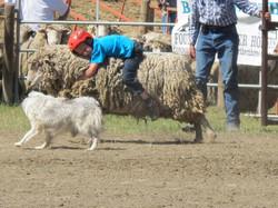 mutton racing