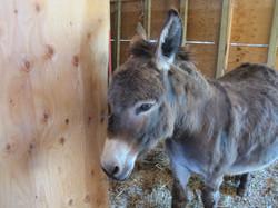 donkey at petting zoo