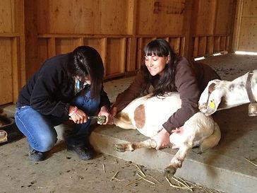 goat hoof care