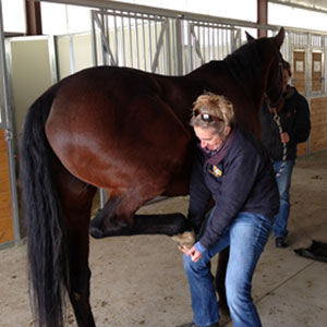 Dr. Tracy equine routine exam