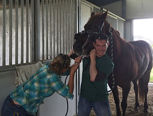 Equine tooth examination