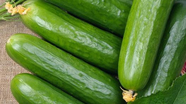Marketer Cucumber 4 inch plant start
