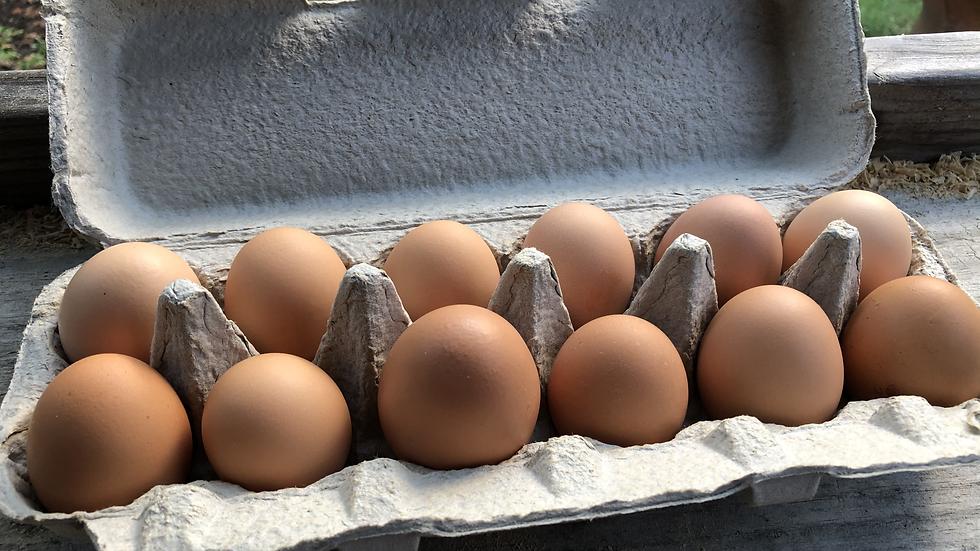 Suburban Farm Fresh Eggs