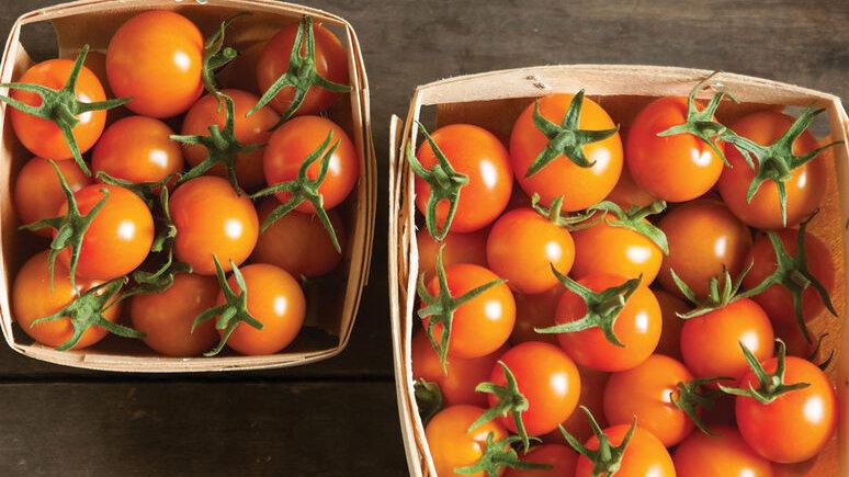 Sungold Cherry Tomato 4 inch Plant Start