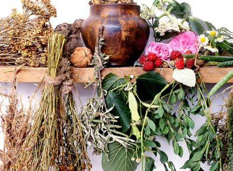 Adaptogens: Herbs to Help Stress
