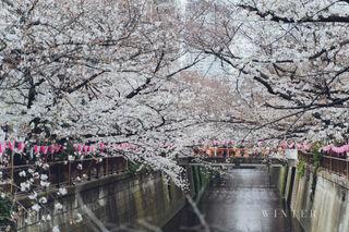 2019_03_28(東京)-55.jpg
