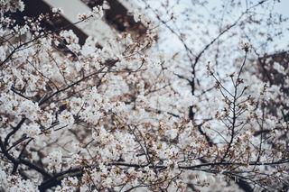 2019_03_28(東京)-16.jpg