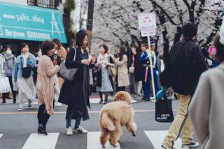 2019_03_28(東京)-86.jpg