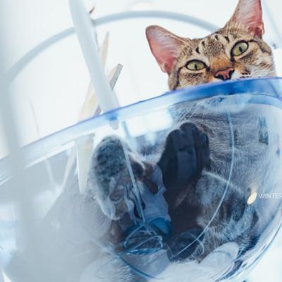 宜蘭 貓的生活提案