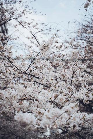 2019_03_28(東京)-15.jpg