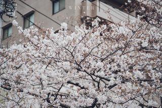 2019_03_28(東京)-13.jpg