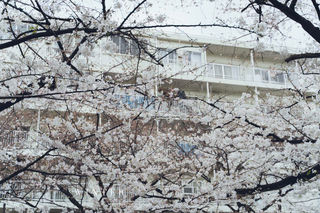 2019_03_28(東京)-54.jpg