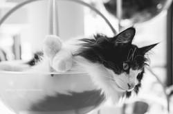 宜蘭|貓的生活提案