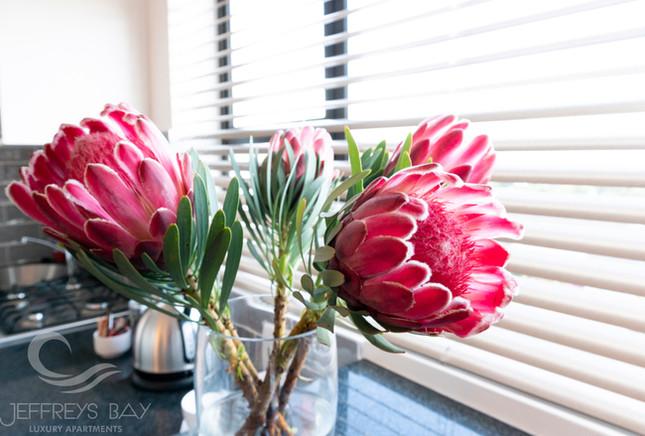 Jeffreysbay_Lux_apartments_Unit8_Flowers