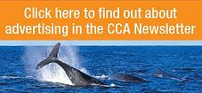 Advertise-in-News-image.jpg