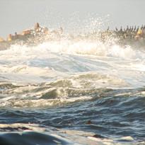 Wild Ocean and Stellar Sea Lions