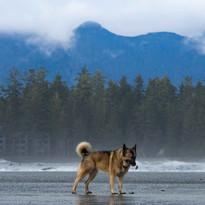 Dog enjoying the fesh breeze