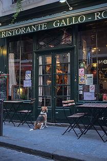 french-restaurant-2506490_1920.jpg