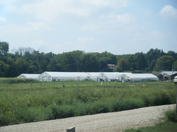 CBI's Giving Tree Farm Greenhouses