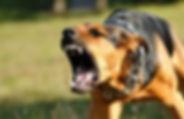 狗3.jpg