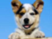 狗10.jpg