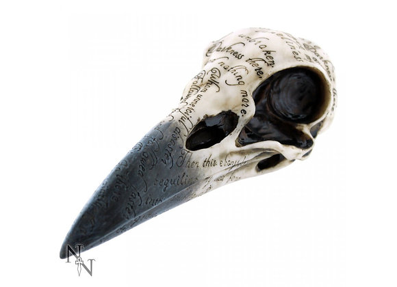 Edgar's Raven Skull (21cm)