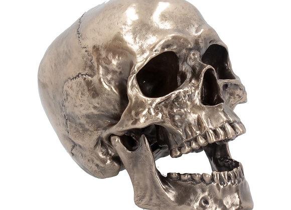 Cranius Skull (22cm)