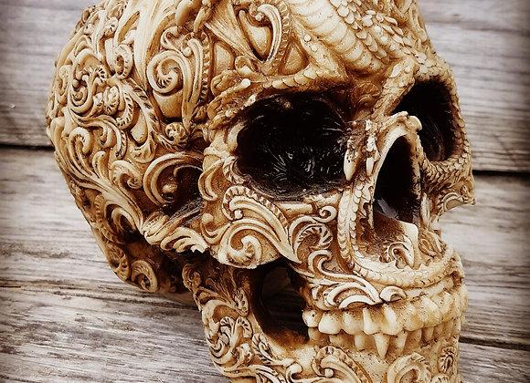 Cranial Drakos skull (19,5cm)