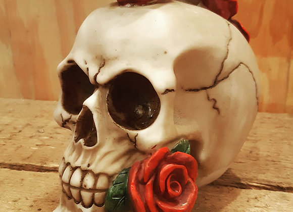 Rosehawk Skull (15 cm)