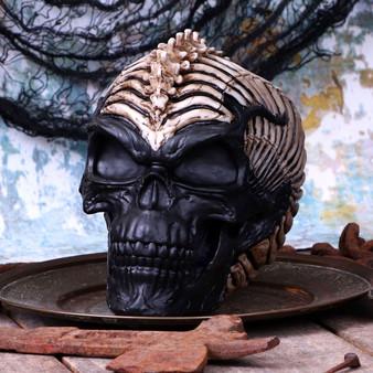 Spinehead skull.jpg