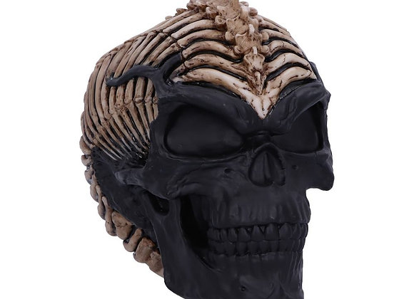 Spine Head Skull (JR) (18cm)