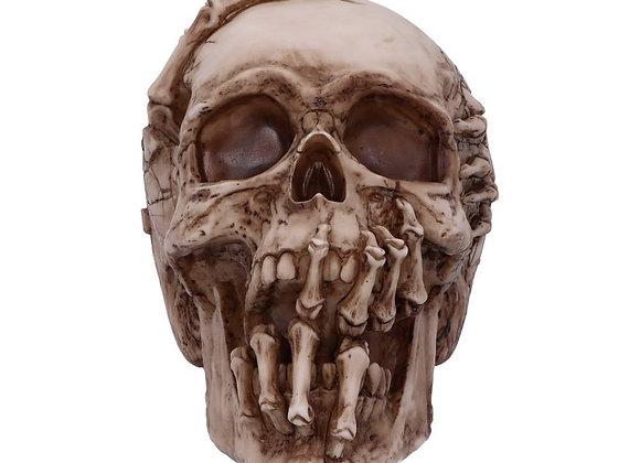 Breaking Out Skull (JR) (20cm)