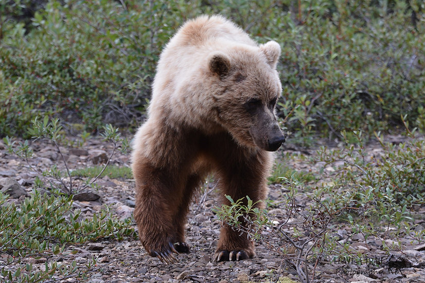 Fuzzy Wuzza Bear
