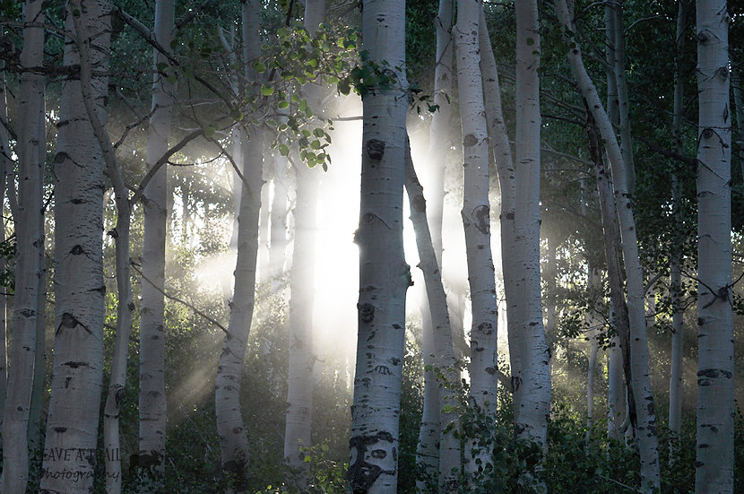 Rays Through the Aspen