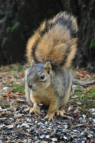 Ah Nuts!